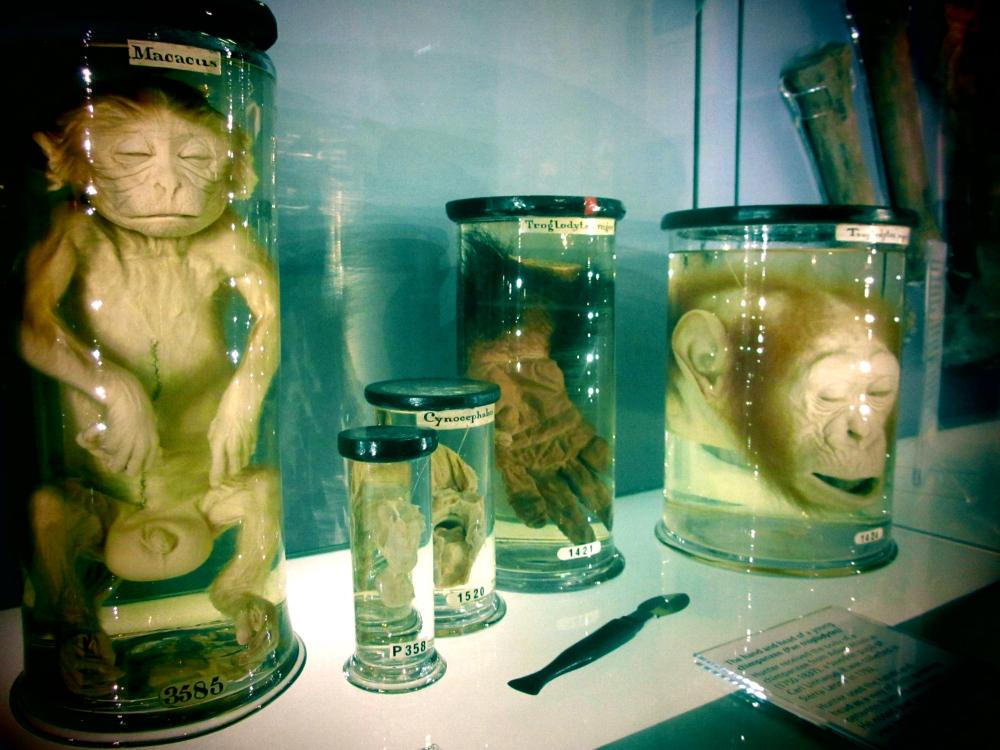 hunterian-museum-london-02