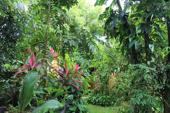 http://www.tripadvisor.com/LocationPhotoDirectLink-g659906-d652716-i97460316-Zimbo_Tropical-Itaparica_Ilha_de_Itaparica_State_of_Bahia.html